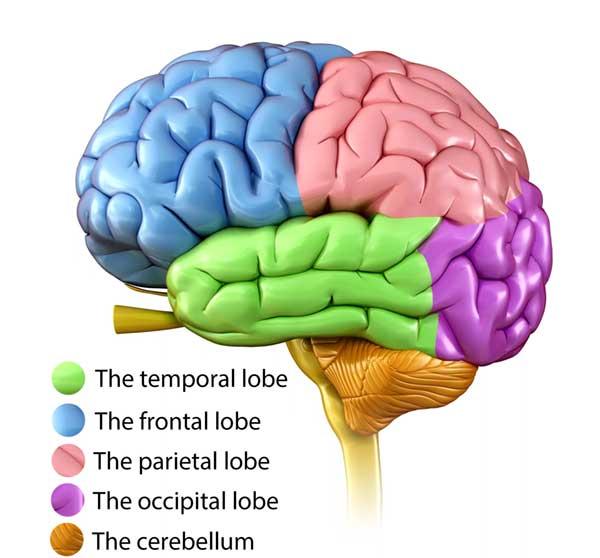 APMC_brain-image